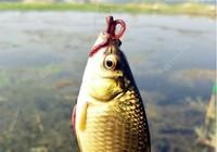 秋季野钓如何能获得更多的渔获