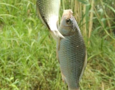 陰天好釣魚,確實有道理