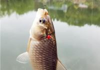 秋季钓鱼重要的三个阶段
