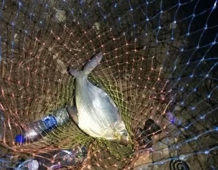 夜战曹地水库,挂底挂的火啊…… 自制饵料钓鳊鱼