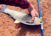 钓友分享湖库钓草鱼的技巧心得