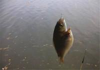 浅谈秋季钓鱼用饵技巧