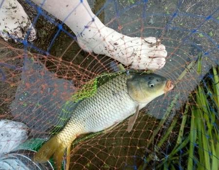 暴雨狂風大青魚,秋水長天共一色。 自制餌料釣鳊魚