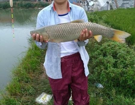 生活。钓鱼记录:给鱼过中元节 钓鱼之家饵料钓鳊鱼