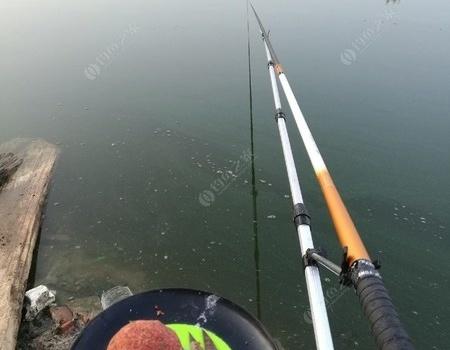 中毒太深,天剛亮就殺往釣點! 龍王恨餌料釣鯉魚