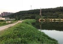里水金沙洲小宝钓鱼休闲基地(二)