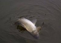 最常见的脱钩跑鱼原因与预防技巧