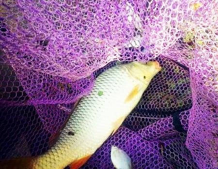 今天和我家夫人。首战茨淮新河 化氏饵料钓鲤鱼