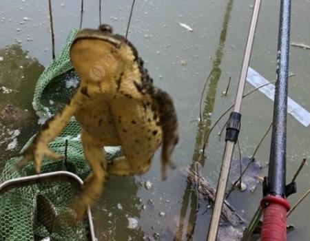 初秋季节大石河畔练鲫鱼 真是惊喜多多!