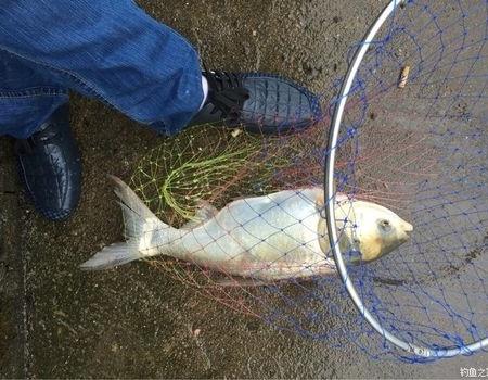 金秋九月敘衢州! 化氏餌料釣鰱鳙魚