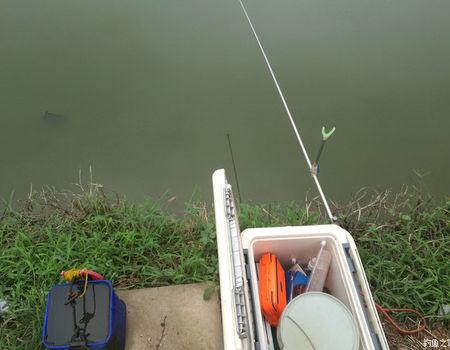 秋天咸淡水,學習手桿釣鰱鳙! 自制餌料釣鰱鳙魚