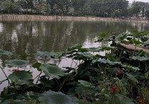 龙湖生态垂钓园
