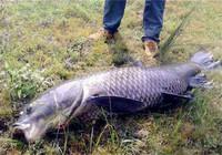 水库野钓大体型鱼打窝具体思路