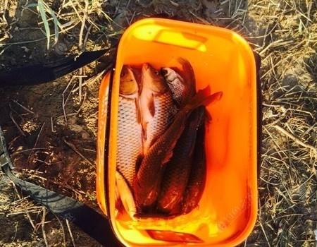每次去都有收获 老鬼饵料钓鳊鱼