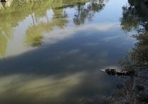 卧龙公园钓鱼园