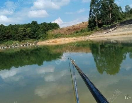 十一獨戰鐮刀灣,鯉草相會甚瘋狂! 釣魚之家餌料釣羅非魚