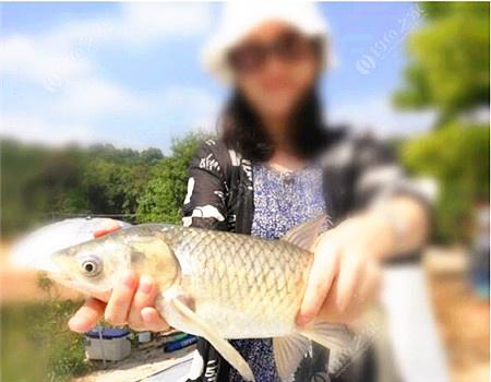十一游玩第一次钓草鱼 钓鱼王饵料钓草鱼