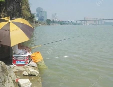 再次垂钓西江 龙王恨饵料钓鲮鱼
