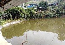 新农村清水鱼