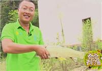 《爸爸去釣魚》第三季07期 柘林湖作釣任務行