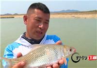 《野钓江湖》第22期 大广坝水库钓获特有鱼种