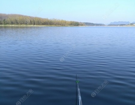 晨時白嘴狂口,  午時花鰱入戶! 釣魚之家餌料釣鰱鳙魚