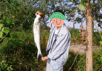 库钓翘嘴鱼钓具与钓饵的选择