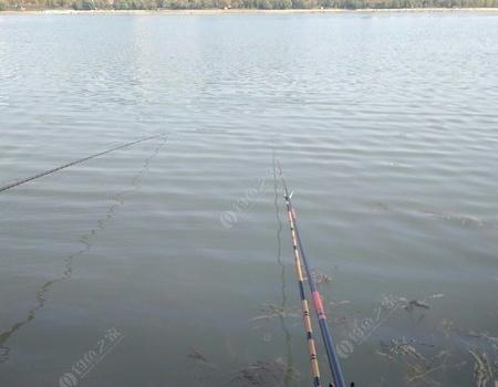 周末的三八水库天好,鱼好,心情大好。 化氏饵料钓鲤鱼