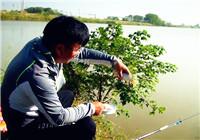 《渔道中国》76期 朱岗农场探钓(上)