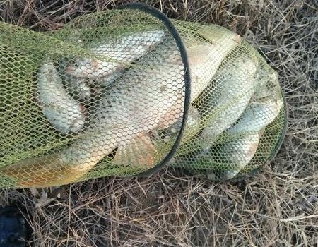 沙河自乐钓钓5再战黄河。 钓鱼之家饵料钓鲤鱼