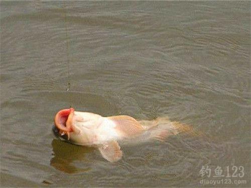 钓鲤鱼饵料配方