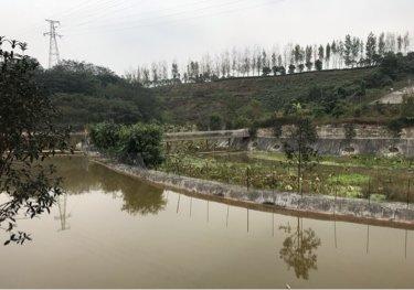 大竹林生态农庄天气预报