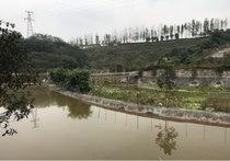 大竹林生态农庄