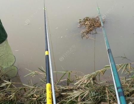 冬天的鱼真的是不好钓 自制饵料钓鲤鱼