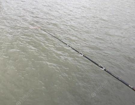 天这么冷,泡点酒米筏钓了! 红虫饵料钓鲫鱼