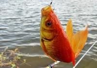 冬季野钓鱼饵如何配置?
