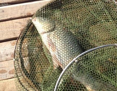 【原创】海砜钓鱼日记之20170714垂钓个人鱼池