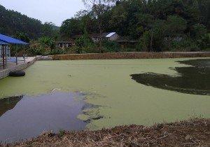 柳州市桐林水产养殖场第一钓场