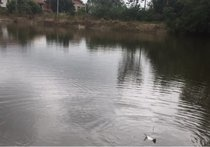 崔興鄉下樂釣場天氣預報
