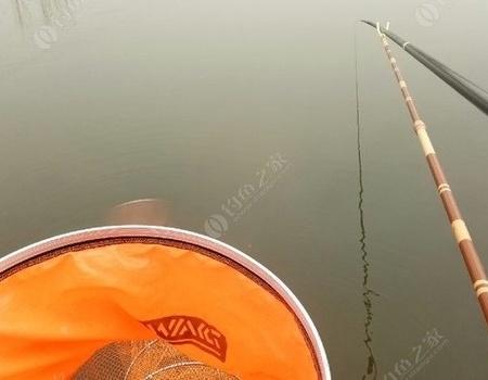 板鲫,我来了 钓鱼之家饵料钓鲢鳙鱼