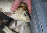 分享冬天钓鱼时钓位选择与打窝技巧(下)