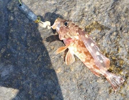 難道海釣是去撈塑料袋的嗎