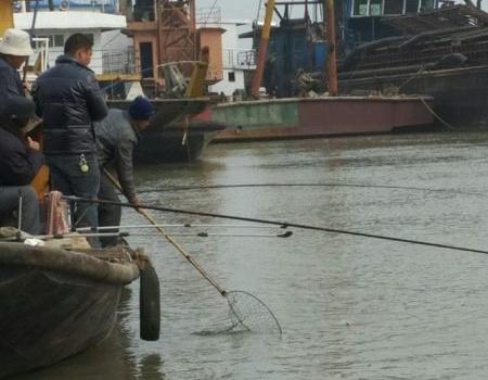 洪湖船码头观战 自制饵料钓草鱼