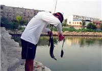 《小松路亚》20171210 亮水用铅头钩路亚黑鱼