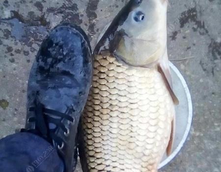 装备还没到丫下雨不敢去解毒啊 自制饵料钓鲤鱼