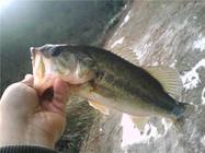 钓鲈鱼应如何选择路亚渔具与拟饵(上)