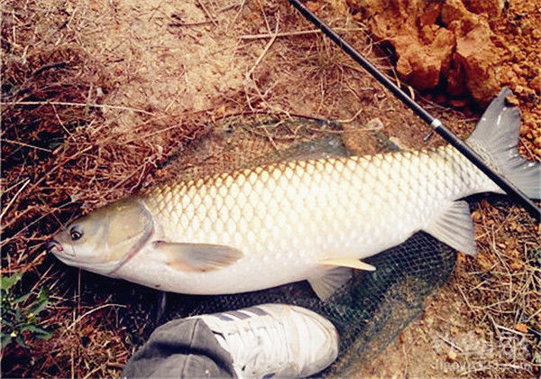 达州动物园龙鱼大佬给看看 达州龙鱼论坛 达州水族批发市场第2张