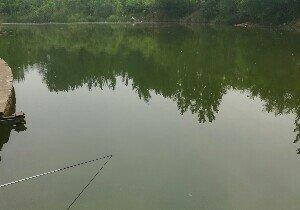 杨树弯水库