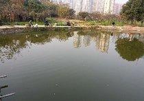 老王鱼塘天气预报