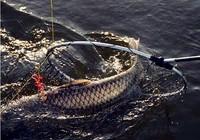 水库钓鱼实用的调钓技巧分享
